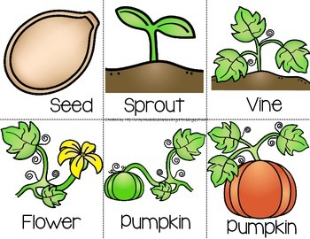Crafty image regarding life cycle of a pumpkin printable